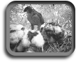 Q3 Rangers can link in to live wildlife webcams.